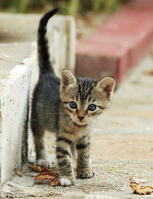 cat species bilder - cat species bilder