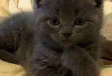cat stock bilder 220x150 - cat stock bilder