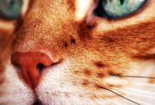 cute cat breeds with pictures bilder 220x150 - cute cat breeds with pictures bilder