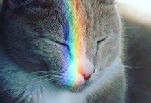 cute cat pictures hd wallpapers bilder 220x150 - cute cat pictures hd wallpapers bilder