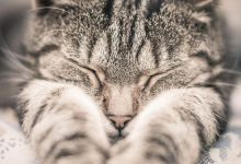 cute cats images free download bilder 220x150 - cute cats images free download bilder