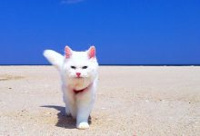 cute dog and cat pictures free download bilder 220x150 - cute dog and cat pictures free download bilder