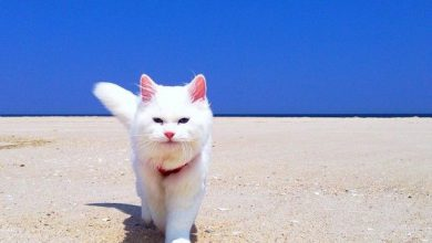 cute dog and cat pictures free download bilder 390x220 - cute dog and cat pictures free download bilder