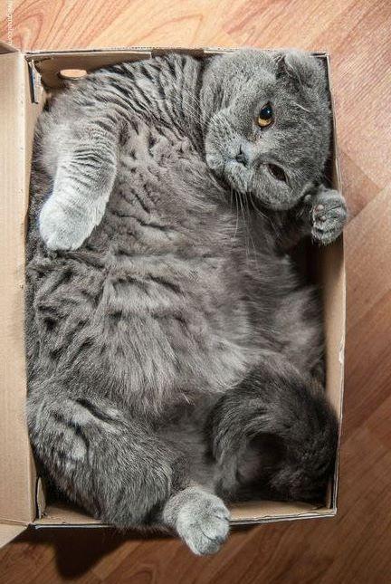 different cats images bilder - different cats images bilder