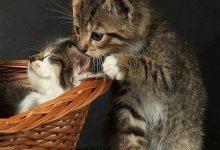 funny cat jokes pictures bilder 220x150 - funny cat jokes pictures bilder