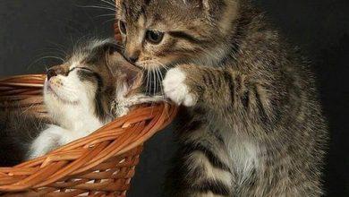 funny cat jokes pictures bilder 390x220 - funny cat jokes pictures bilder