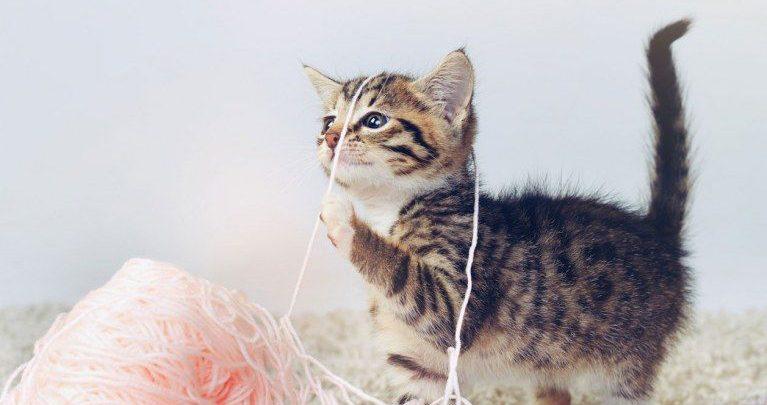 funny cat pictures sayings bilder  bilder und sprüche für