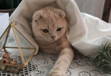 google cat pictures bilder 220x150 - google cat pictures bilder