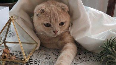 google cat pictures bilder 390x220 - google cat pictures bilder