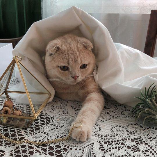 google cat pictures bilder - google cat pictures bilder