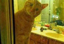 hd cats pics bilder 220x150 - hd cats pics bilder