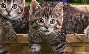 images of adorable cats bilder 361x220 - images of adorable cats bilder