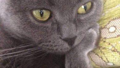images of black kittens bilder 390x220 - images of black kittens bilder
