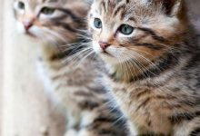 images of the cutest cat in the world bilder 220x150 - images of the cutest cat in the world bilder