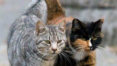 indian cat images bilder 390x220 - indian cat images bilder