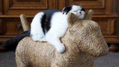 ok google pictures of cats bilder 390x220 - ok google pictures of cats bilder