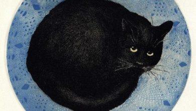 photo cats digital bilder 390x220 - photo cats digital bilder