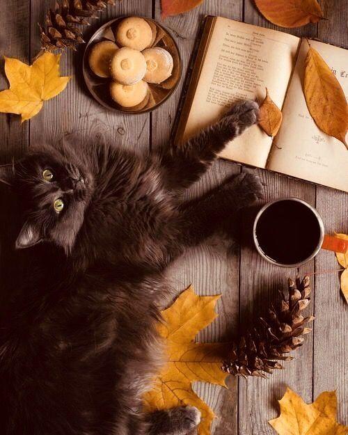 pics of black kittens bilder - pics of black kittens bilder