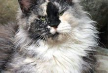 pics of gray cats bilder 220x150 - pics of gray cats bilder