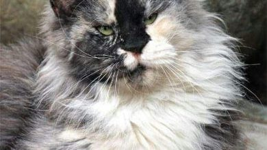 pics of gray cats bilder 390x220 - pics of gray cats bilder