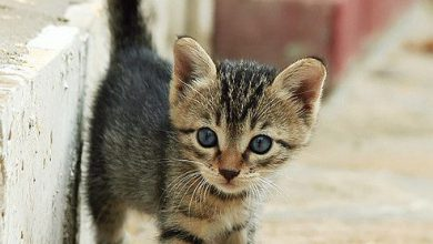 picture of cat black and white bilder 390x220 - picture of cat black and white bilder