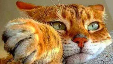 pictures of all kinds of cats bilder 390x220 - pictures of all kinds of cats bilder