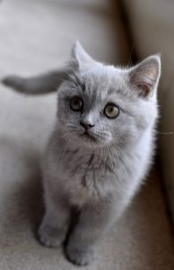 pictures of cats in black and white bilder 194x300 - pictures of cats in black and white bilder