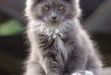 pictures of cats please bilder 220x150 - pictures of cats please bilder