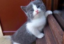 pictures of different cats bilder 220x150 - pictures of different cats bilder