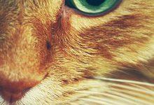 pictures of yellow cats bilder 220x150 - pictures of yellow cats bilder