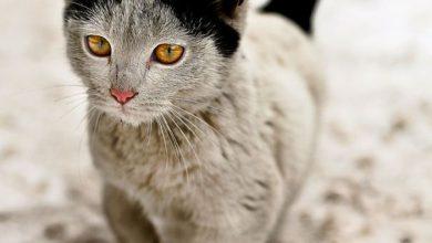 weird cat pictures with captions bilder 390x220 - weird cat pictures with captions bilder