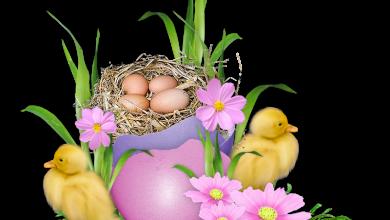 Frohe Ostern Grüße Wünsche 390x220 - Frohe Ostern Grüße Wünsche