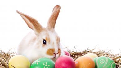 Lustige Frohe Ostern Wünsche 390x220 - Lustige Frohe Ostern Wünsche