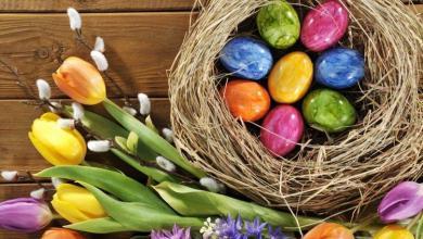 Ostern Glückwünsche 390x220 - Ostern Glückwünsche