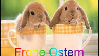 Ostern Wünsche Glückwünsche 390x220 - Ostern Wünsche Glückwünsche