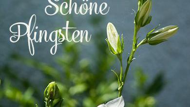 Ostern Wünsche Sprüche Lustig 390x220 - Ostern Wünsche Sprüche Lustig