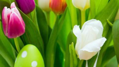 Schöne Bilder Ostern 390x220 - Schöne Bilder Ostern