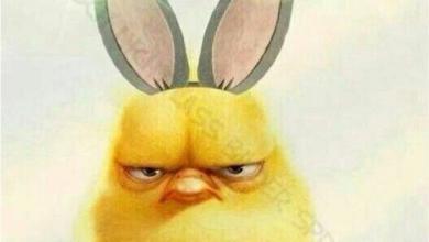 Frohe Ostern Lustige Ostergrusse Bilder Und Spruche Fur Whatsapp