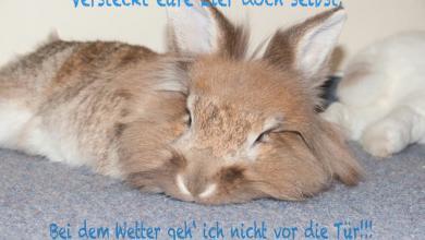 Whatsapp Ostergrüße Lustig 390x220 - Whatsapp Ostergrüße Lustig