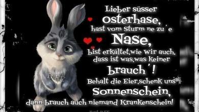 Witzige Ostergrüße Bilder 390x220 - Witzige Ostergrüße Bilder