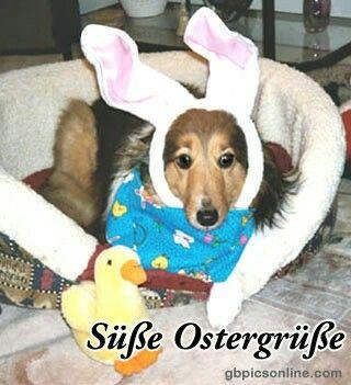 Witzige Ostergrüsse - Witzige Ostergrüsse