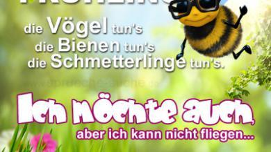 frühling für whatsapp 390x220 - Frühling für whatsapp
