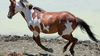 3d Pferde Bilder Kostenlos Herunterladen 390x220 - 3d Pferde Bilder Kostenlos Herunterladen