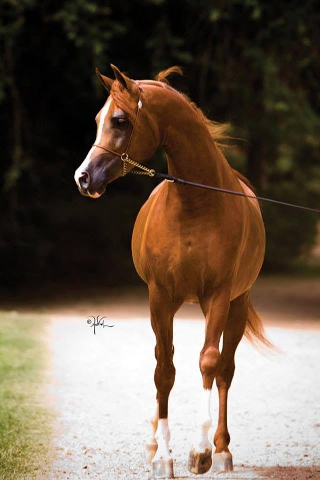 alles über pferde zum ausdrucken  ausmalbilder und vorlagen