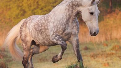 Alles Über Pferde Kostenlos Downloaden 390x220 - Alles Über Pferde Kostenlos Downloaden