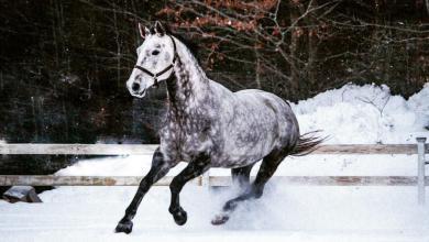 Alles Über Pferde Kostenlos Herunterladen 390x220 - Alles Über Pferde Kostenlos Herunterladen