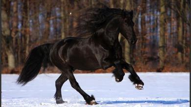 Alte Pferde Kostenlos Downloaden 390x220 - Alte Pferde Kostenlos Downloaden