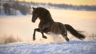 Alte Pferde Kostenlos Herunterladen 390x220 - Alte Pferde Kostenlos Herunterladen