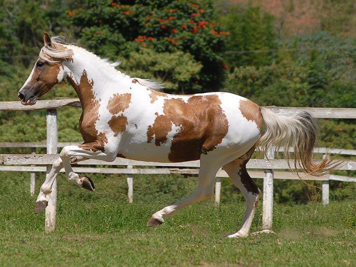 Andalusier Pferd Kostenlos Herunterladen - Andalusier Pferd Kostenlos Herunterladen