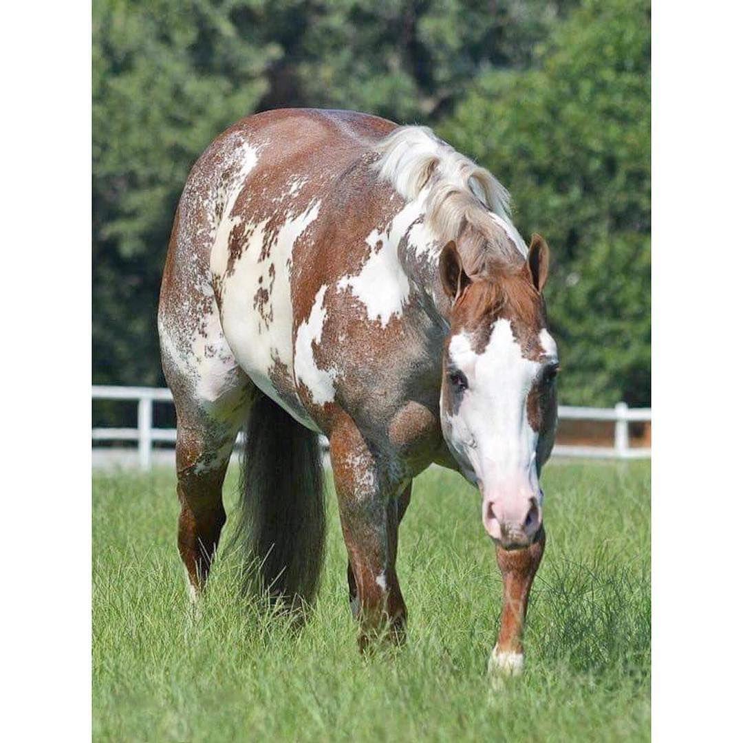 Andalusier Pferde Bilder Für Facebook - Andalusier Pferde Bilder Für Facebook
